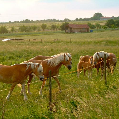 beliebte pferderassen